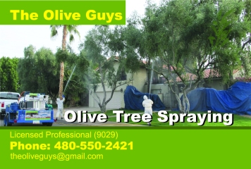 Olive Tree Guys Postcard Front