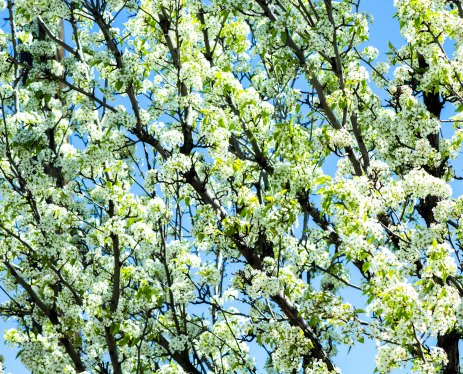Blooming Tree 2 (Optimized)