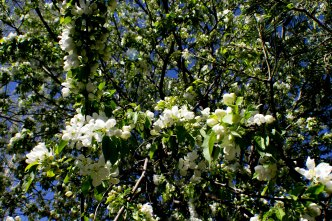 Blooming Tree Full View (Optimized)