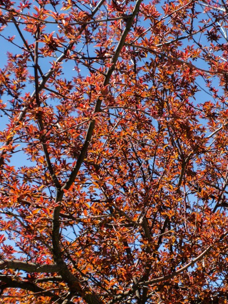 Red-Tree-2-(Optimized)